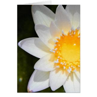 美しい花の白濁水ユリ カード