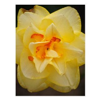 美しい花プロダクト ポストカード