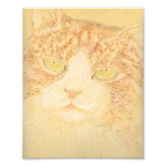 美しい虎猫猫の芸術のプリント フォトプリント
