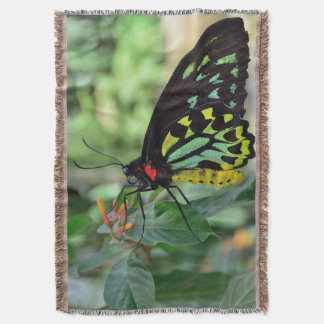 美しい蝶 スローブランケット