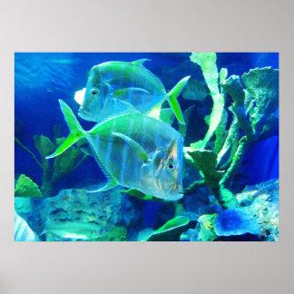 美しい青および緑の熱帯魚 プリント