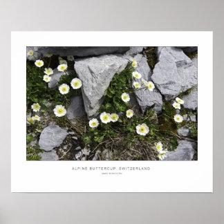 美しい高山のキンボウゲ-壁のプリント ポスター