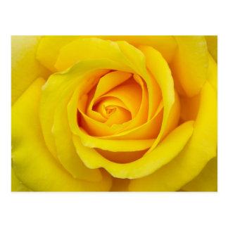 美しい黄色バラ ポストカード