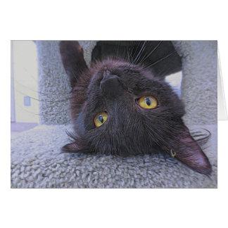 美しい黒猫 カード
