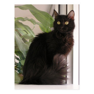 美しい黒猫 ポストカード