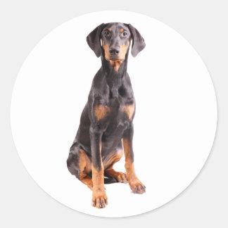 美しい(犬)ドーベルマン・ピンシェル ラウンドシール