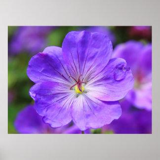 美しいcranesbillの花 ポスター