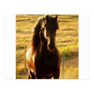 美しいFRIESIANの馬の種馬 ポストカード