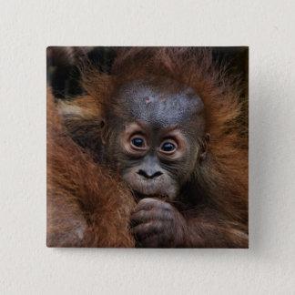 美しいorangの赤ん坊 5.1cm 正方形バッジ