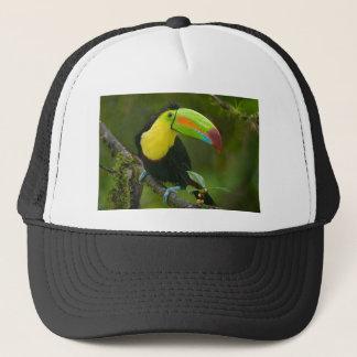 美しいtoucan鳥は枝でとまりました キャップ