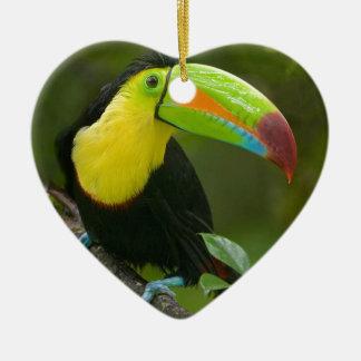 美しいtoucan鳥は枝でとまりました セラミックオーナメント