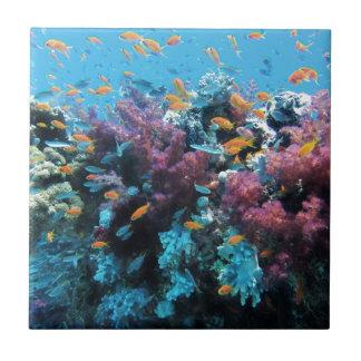 美しく多彩な水中世界 タイル