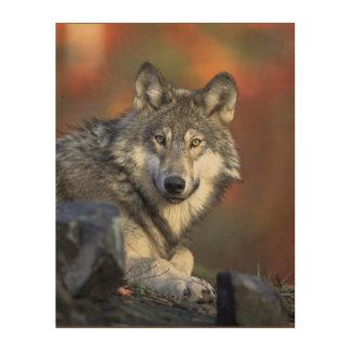 美しく威厳のあるなオオカミの野性生物の森林壁の芸術 ウッドウォールアート