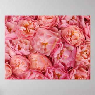 美しく小さいバラ ポスター