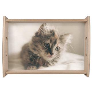 美しく小さい子ネコ猫の子猫 トレー