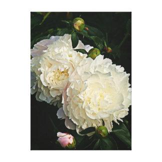 美しく白いシャクヤクの花のキャンバスプリント キャンバスプリント