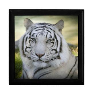 美しく白いトラ(v2) ギフトボックス
