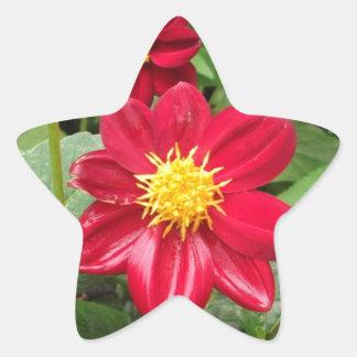 美しく赤い花 星シール