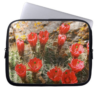 (美しく赤い開花が付いているサボテン ラップトップスリーブ
