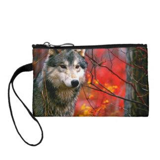 美しく赤くおよび黄色の群葉のオオカミ コインパース