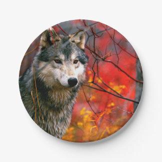 美しく赤くおよび黄色の群葉のオオカミ ペーパープレート