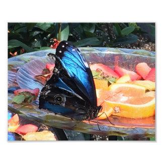 美しく青および黒い蝶 フォトプリント