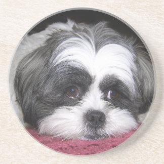 美女シーズー(犬)のTzu犬 コースター