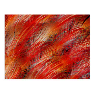 羽の抽象芸術赤い極楽鳥 ポストカード