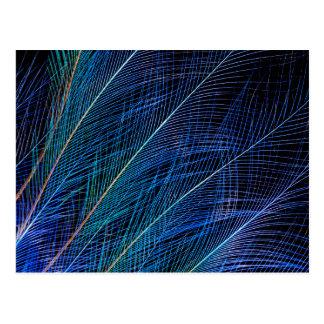 羽の抽象芸術青い極楽鳥 ポストカード