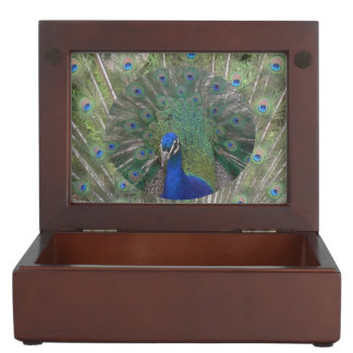 羽の記念品箱を持つ孔雀 ジュエリーボックス