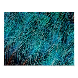 羽青い極楽鳥 ポストカード