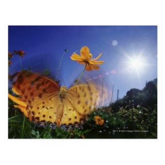 翼をはためかす蝶のクローズアップ ポストカード