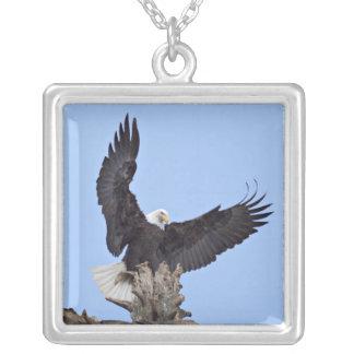 翼を持つ白頭鷲(Haliaeetusのleucocephalus) シルバープレートネックレス