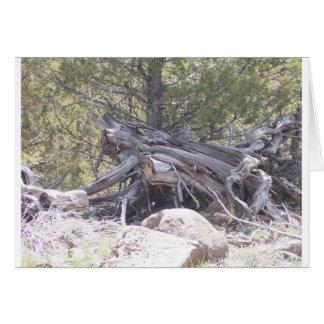 老化木の混乱 カード