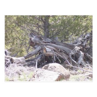 老化木の混乱 ポストカード