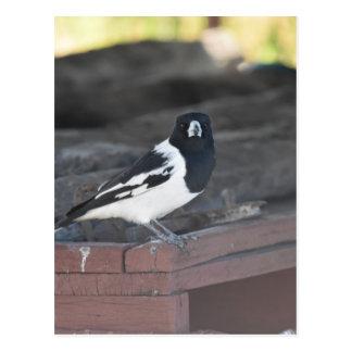 肉屋の鳥田園クイーンズランドオーストラリア ポストカード