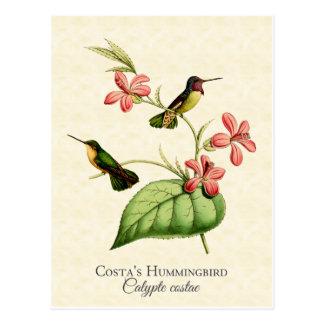 肋骨のハチドリのヴィンテージの芸術 ポストカード