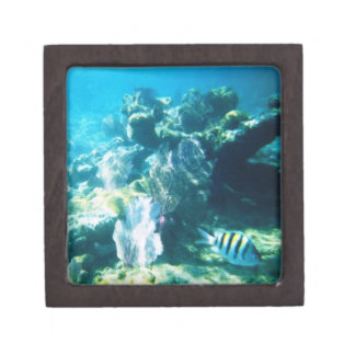 肋骨のマヤ礁の優れたギフト用の箱 ギフトボックス