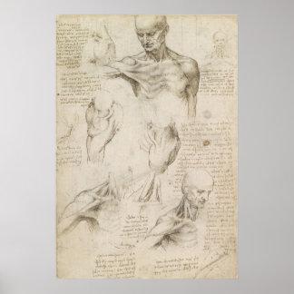 肩および首のレオナルドの解剖スケッチ ポスター