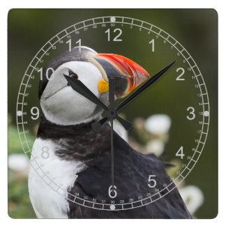 肩のツノメドリに見ること スクエア壁時計