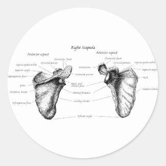 肩甲骨の詳細 ラウンドシール
