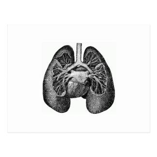 肺及びハート ポストカード