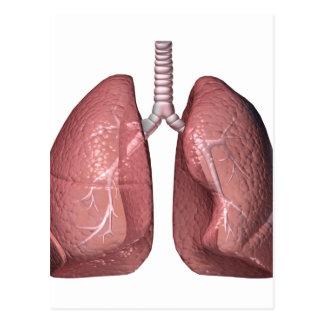 肺 ポストカード
