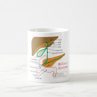胆汁の系統図の図表の胆管 コーヒーマグカップ