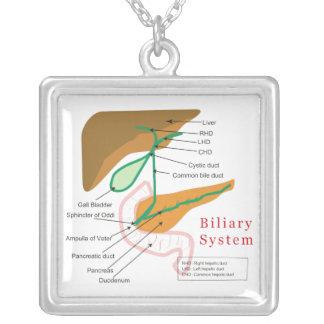 胆汁の系統図の図表の胆管 シルバープレートネックレス