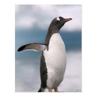 背景幕が付いている岩が多い海岸線のGentooのペンギン ポストカード