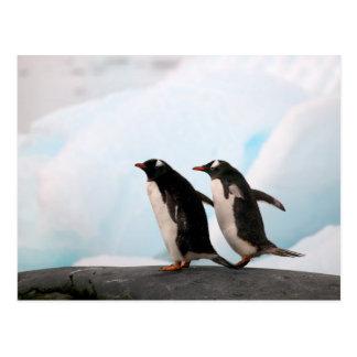 背景幕2が付いている岩が多い海岸線のGentooのペンギン ポストカード