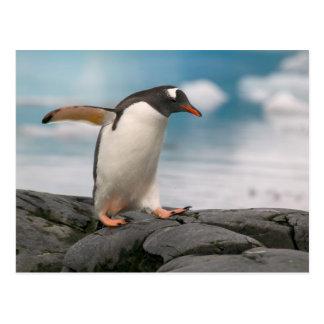 背景幕3が付いている岩が多い海岸線のGentooのペンギン ポストカード