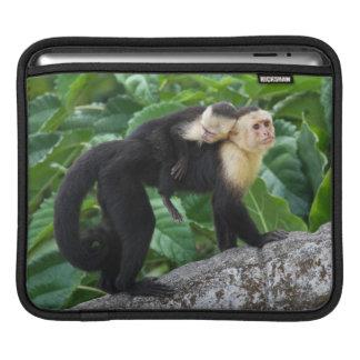 背部のベビーを運んでいる大人のCapuchin猿 iPadスリーブ