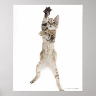 背部足に立っている子ネコ ポスター